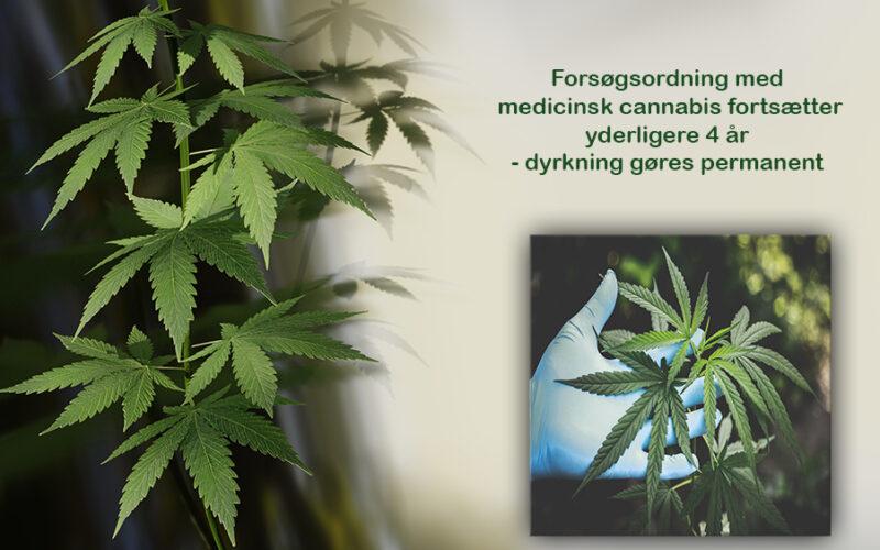 Forsøgsordning med medicinsk cannabis fortsætter yderligere 4 år – dyrkning gøres permanent